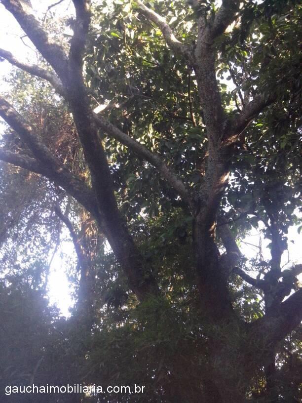 Terreno, Berto Cirio, Nova Santa Rita (315025) - Foto 3