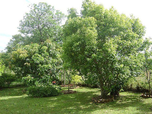 Casa 3 Dorm, Bosques do Sul, Gravataí (26327) - Foto 4
