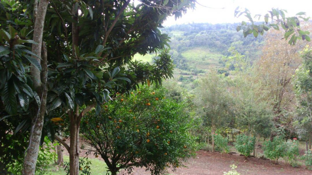 Fazenda, Linha Nacente do Prado, Vicente Dutra (339616) - Foto 10