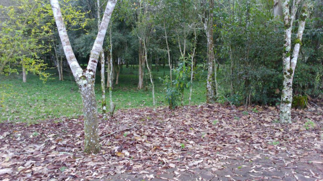 Fazenda, Linha Nacente do Prado, Vicente Dutra (339616) - Foto 4