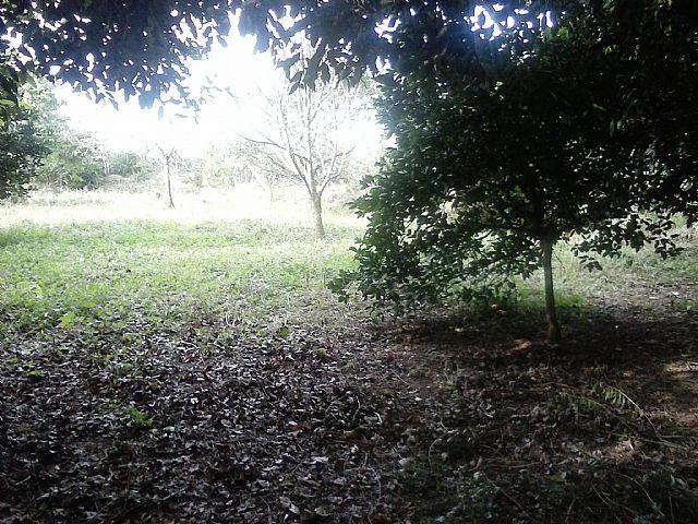 Casa, Caju, Nova Santa Rita (263151) - Foto 5