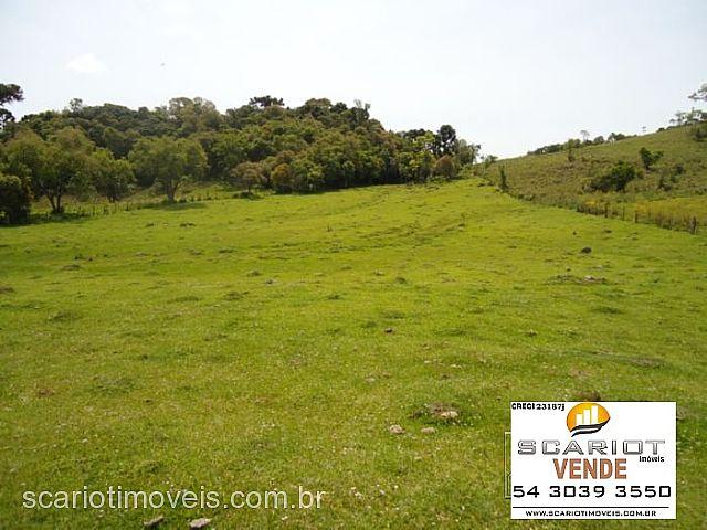 Chácara 3 Dorm, Formigueri, São Marcos (135225) - Foto 5