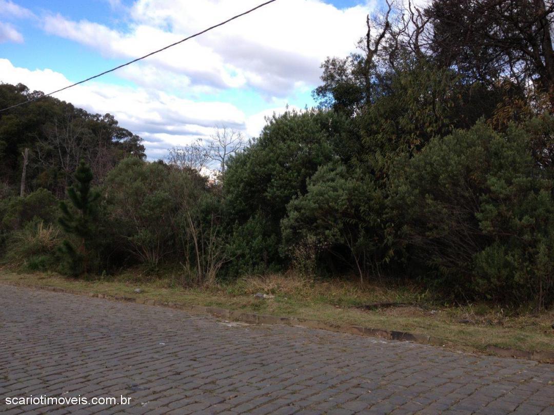 Scariot Imóveis - Terreno, Vila Horn (201426) - Foto 4