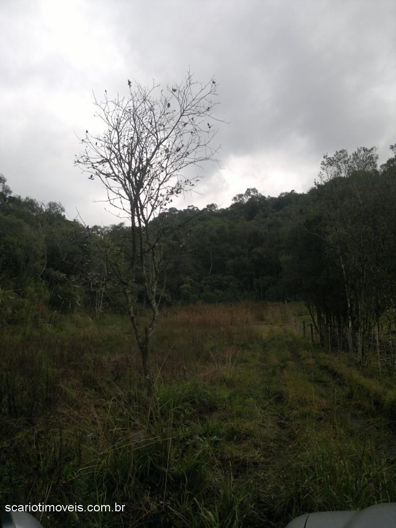 Scariot Imóveis - Chácara, Fazenda Pedras Brancas - Foto 2