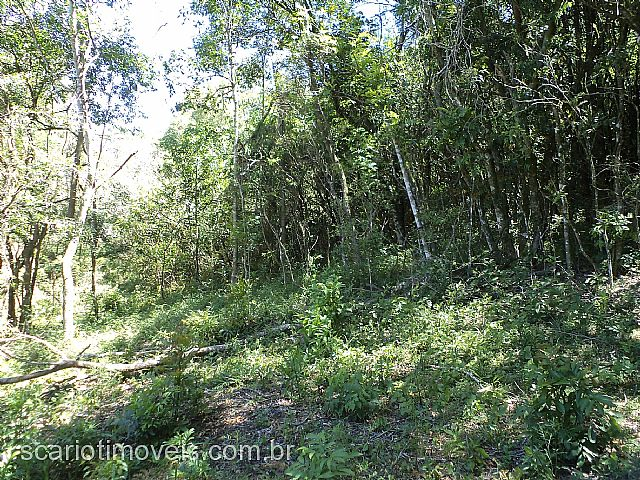 Scariot Imóveis - Chácara, Fazenda Pedras Brancas - Foto 5
