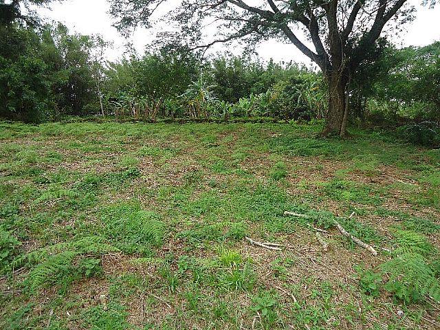 Terreno, Oeste, Sapiranga (274484) - Foto 4