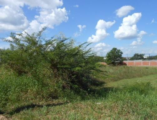 AtendeBem Imóveis - Terreno, Dona Augusta (352931) - Foto 3