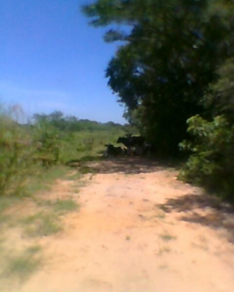 JFernando Imóveis - Terreno, Mato Grande, Canoas - Foto 3