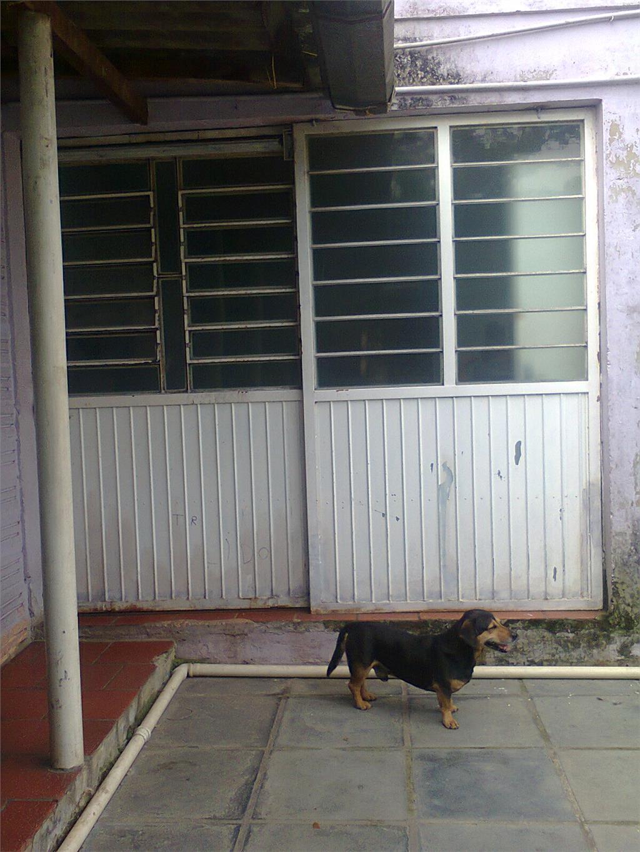JFernando Imóveis - Casa 3 Dorm, Harmonia, Canoas - Foto 9